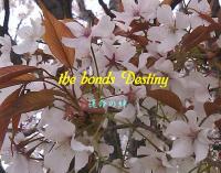 the bonds Destiny BANNER_01