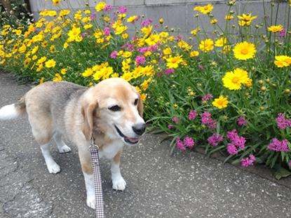 どこに咲いてる花でしょうか?