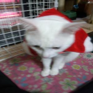 DSC_0077_convert_20111224215905クリスマス3
