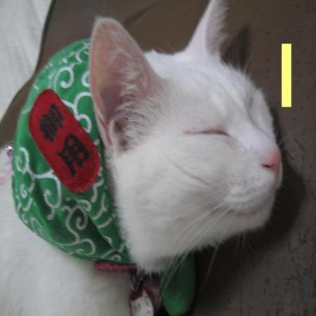 繝上メ繝サ蟇昴k_convert_20120425230913ハチ・ねる