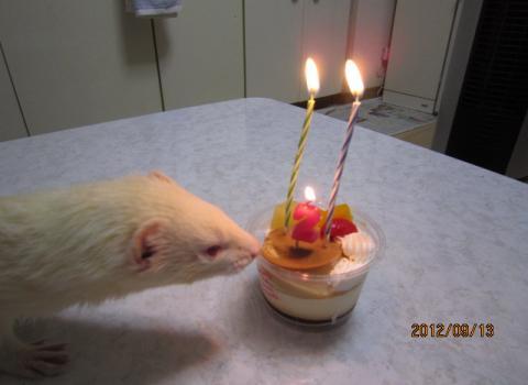 IMG_0680_convert_20120914065828ミルクくん誕生日2歳