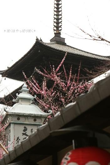 写真00459(1)