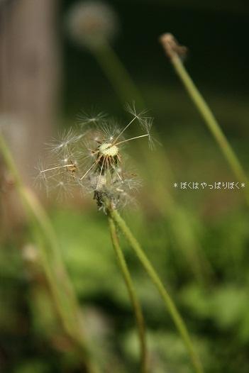 写真00198(1)
