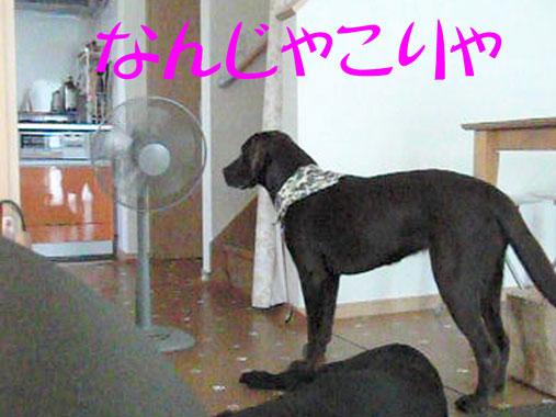 CIMG7243.jpg