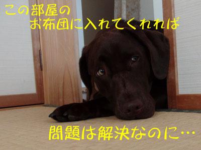 CIMG8416.jpg