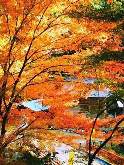 横蔵寺の紅葉2