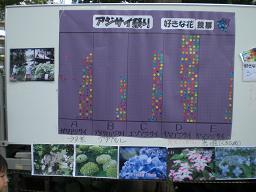 10.6.13指扇氷川神社アジサイ祭り (17)