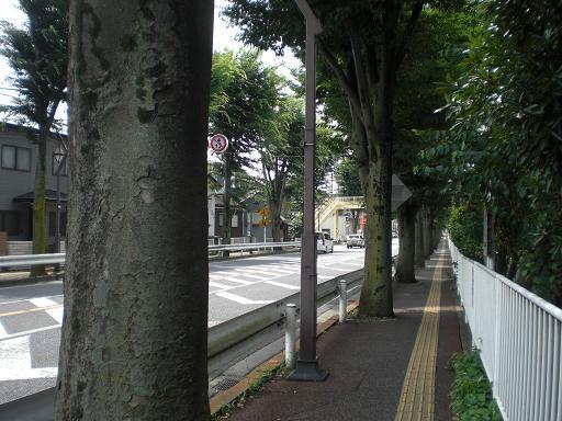 10.7.8欅並木 (6)