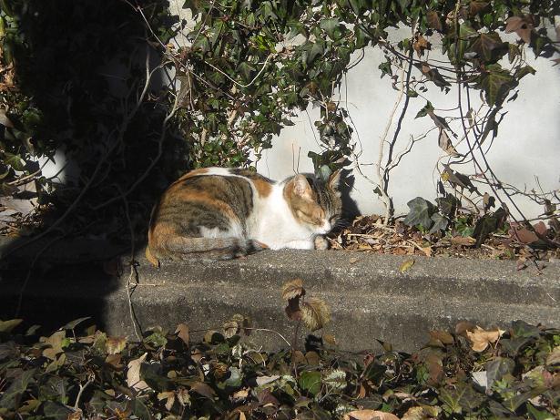 11.1.31ブログ用陽だまりの猫