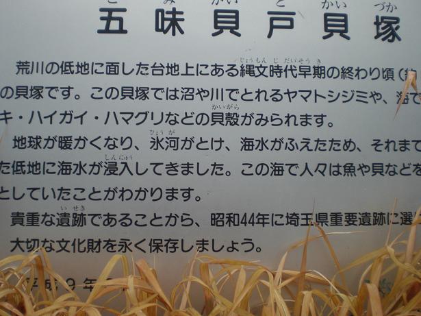 11.2.12ブログ用貝塚 (8)