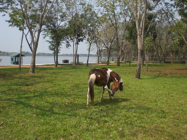 11.2.18-22バンコクとコテージが。遊園地、動物園、ワニ園、水族館などなど・・・、ここはバンコクにも近く(100キロくらいか?)あこがれのリゾートなのだそうです<br /><br /><br />5、水牛園<br /><a href=