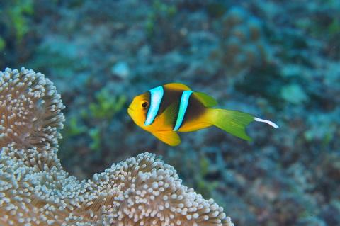 オレンジフィンと寄生虫