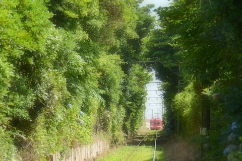 緑のなかを走る電車