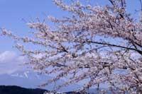 桜と浅間山