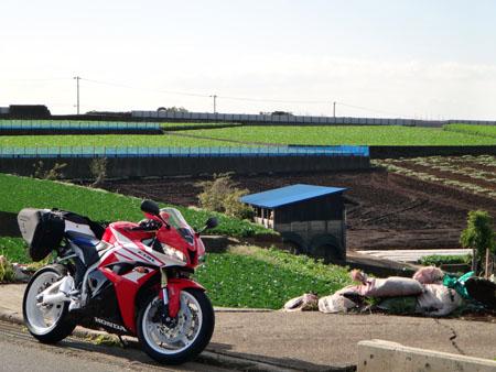 CBRと大根畑