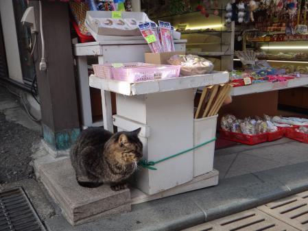 招き猫よろしく座ってた猫