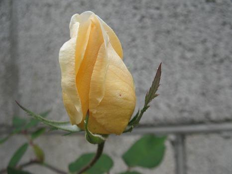 ヒリンドン (2)