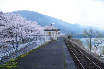 春爛漫の三江線(5)