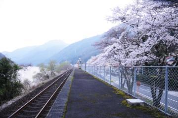 春爛漫の三江線(6)