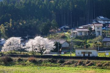 春爛漫の三江線(22)