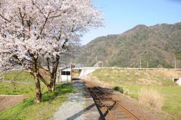 春爛漫の三江線(23)