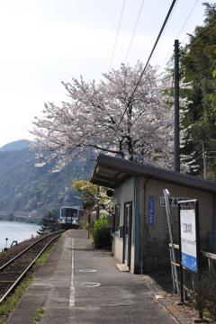 春爛漫の三江線(31)