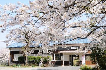 春爛漫の三江線(41)