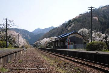春爛漫の三江線(45)