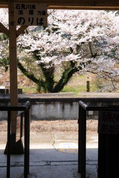 春爛漫の三江線(61)