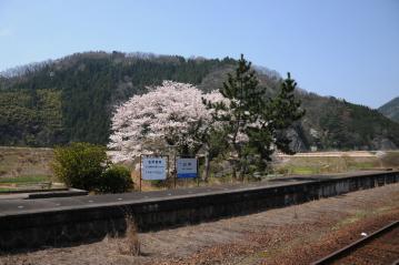 春爛漫の三江線(62)