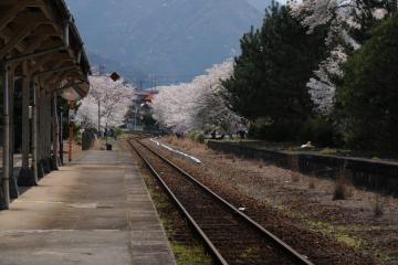 春爛漫の三江線(63)