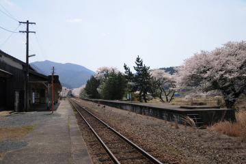 春爛漫の三江線(64)