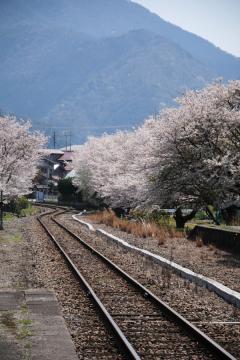 春爛漫の三江線(65)