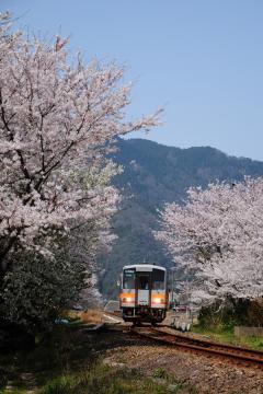 春爛漫の三江線(67)