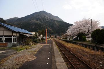 春爛漫の三江線(81)