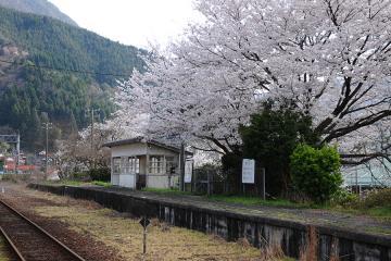 春爛漫の三江線(82)