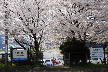 春爛漫の三江線(83)