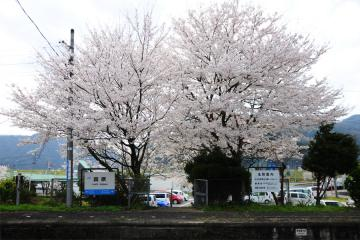 春爛漫の三江線(84)