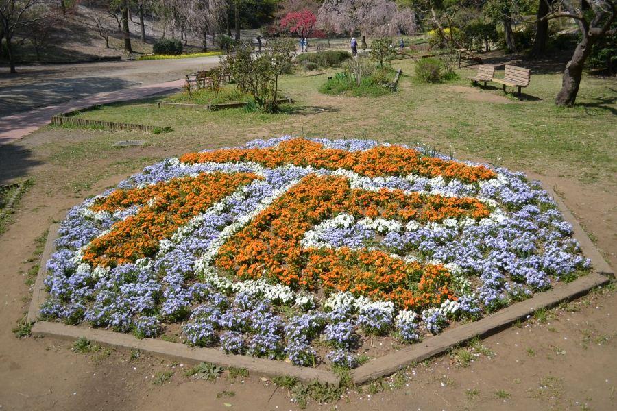 花パンジー