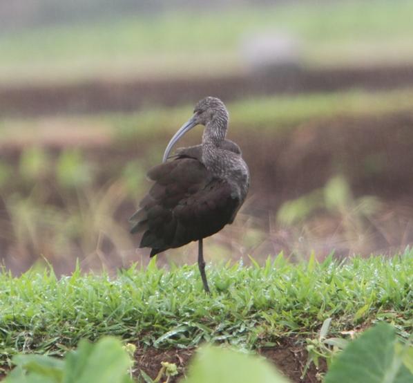 Strange Bird 7