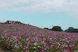 2014-10-kosumosu.jpg