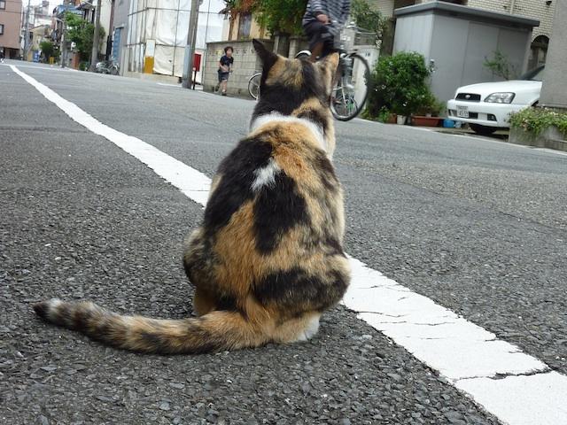 Schoolgirl legs [無断転載禁止]©bbspink.comYouTube動画>1本 ->画像>4520枚