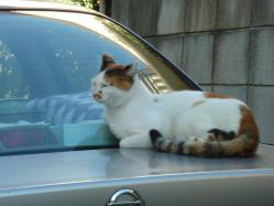 130211_cat.jpg