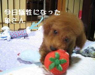 003_20111011194303.jpg