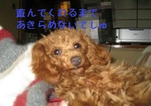 005_20120118225307.jpg