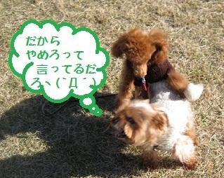 011_20111205201125.jpg