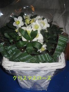 012_20111217230641.jpg
