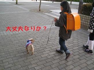 013_20120110180133.jpg
