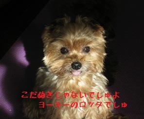 024_20111210224938.jpg