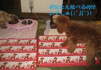 049_20111227001211.jpg
